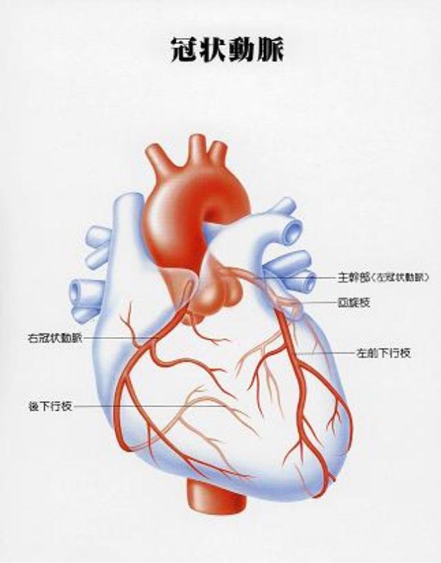 梗塞 心筋 知らないと後悔する「心筋梗塞」の意外な予兆とは?